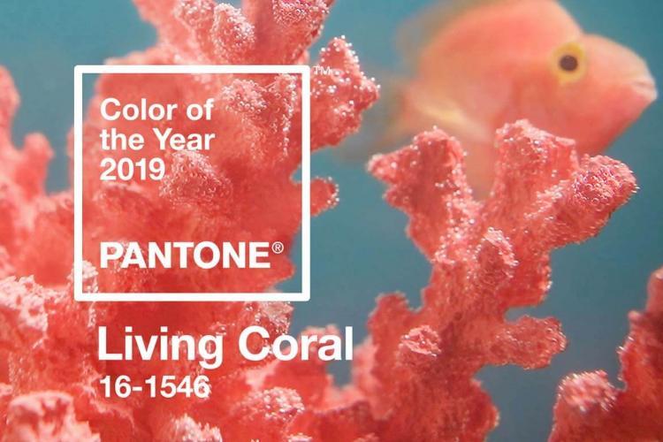 Living Coral – a 2019-es év színe